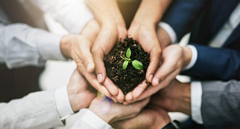 Hände halten Pflanze